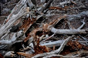 Forest Floor (1)